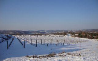 Saint-Andéol village - vignes sous la neige