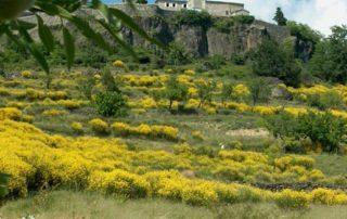 Saint-Laurent village vue