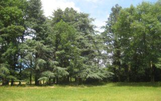 Arboretum - Berzème