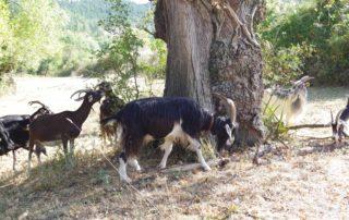 Chèvrerie des Montfleury