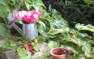 Flowers - Domaine de la Manse