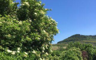Villeneuve de Berg aux portes de la nature