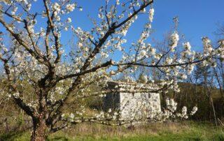 Farm and Distillery Beautheac